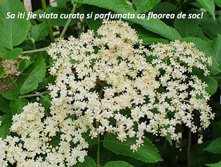 imagini flori mesaje deosebite