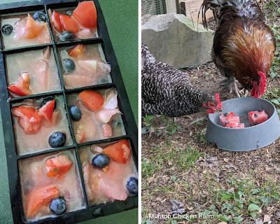 Fruit juice chicken treats for summer.