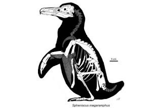 Esqueleto de un pingüino