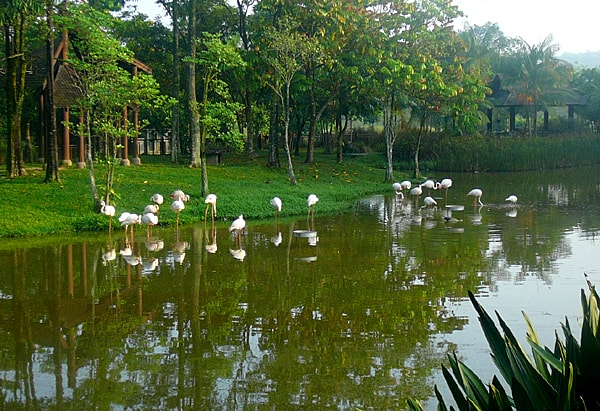Bird Watching Putrajaya Wetland Park