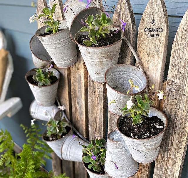 Galvanized Bucket Wreath with Violets #violets #flowergardening #containergarden #galvanizedwreath #galvanizedpots #farmhousestyle #rusticgarden