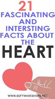 26 Fascinating And Interesting Facts About The Heart
