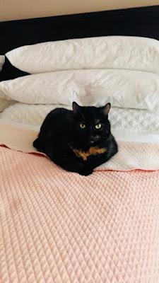 Lil g kitty cat
