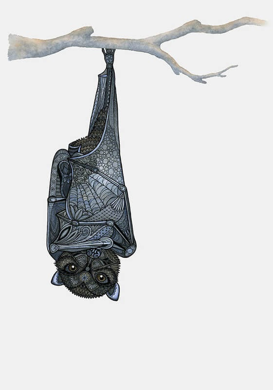 12-Inquisitive-Bat-Z-H-Field-Distinctive-Animal-Drawings-and-Paintings-www-designstack-co