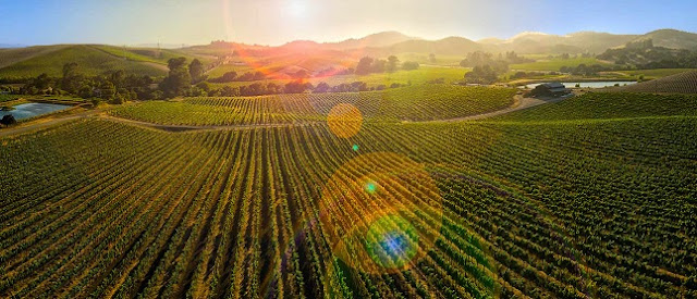 Vinícolas em Napa Valley em San Francisco