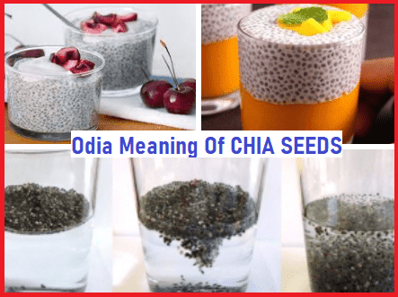 Odia Meaning of Chia Seed