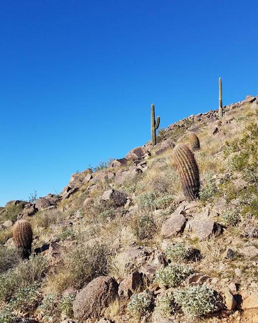 Camelback Mountain Cholla Trail