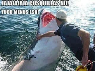 hacer cosquillas, tiburón blanco,  jajaja, cosquillas no, todo menos eso !!