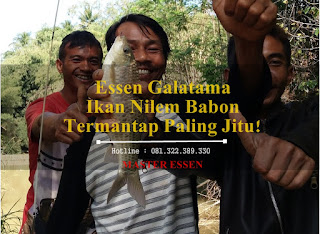 Essen Ikan Nilem Babon Galatama