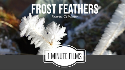 Frost Feathers Film