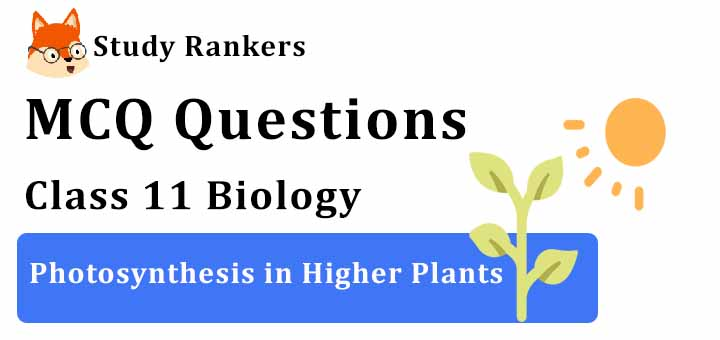 MCQ Questions for Class 11 Biology: Ch 13 Photosynthesis in Higher Plants