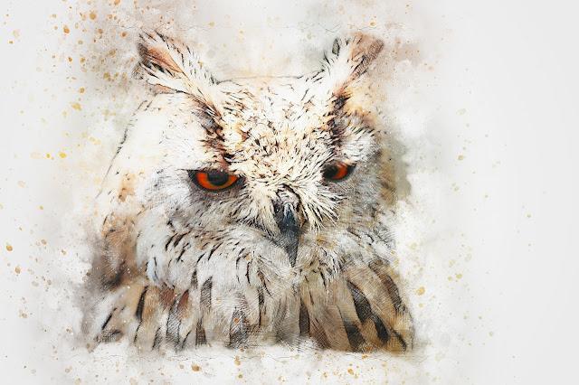 لوحات فنية لطيور