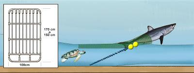 tiburon rejilla%2Bflexible %25281%2529 - Cañabota que fue donada a la ciencia por la embarcación el Paraiso al proyecto ECEME