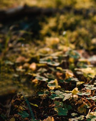Focused Nature Blur Background Free Stock Image