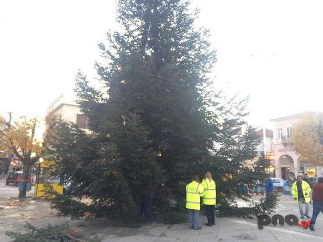 Τεράστιο έλατο τοποθετήθηκε για Χριστουγεννιάτικο δέντρο στην Τρίπολη (βίντεο)