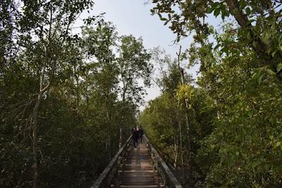 Harbaria of Sundarban in Bangladesh
