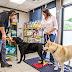 Como escoger la mejor tienda de mascotas