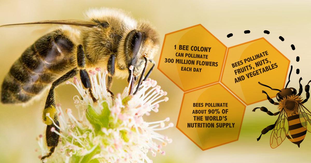 fakta tentang Lebah