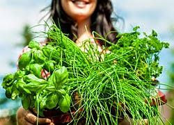 Las mejores plantas medicinales para bajar de peso curatodo for Plantas para bajar de peso