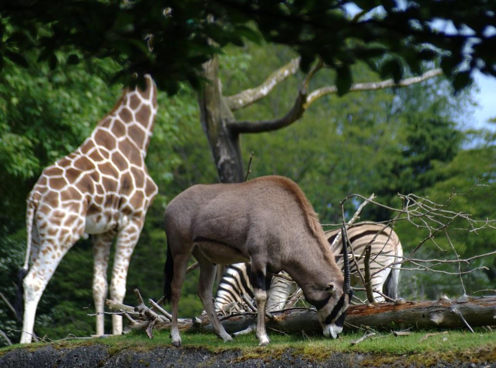 The herbivores
