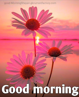 Good Morning Images Hd, Good Morning Hd Images, Good Morning Images With Flowers Hd, Good Morning Images Hd 1080p Download, Best Good Morning Images Hd, Hd Good Morning Images, Amazing Good Morning Images Hd, Good Morning God Images Hd