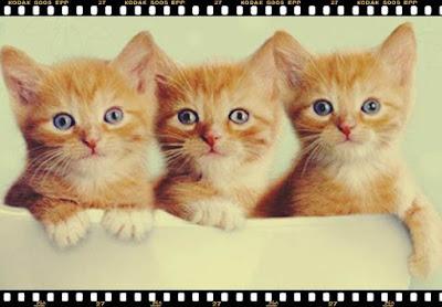 nume de pisici romanesti forum nume de pisici speciale