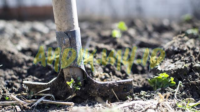 organik, pertanian organik, sayur organik, kebun organik, berkebun