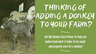Everything you need to know before you bring home a donkey! Donkey care basics!
