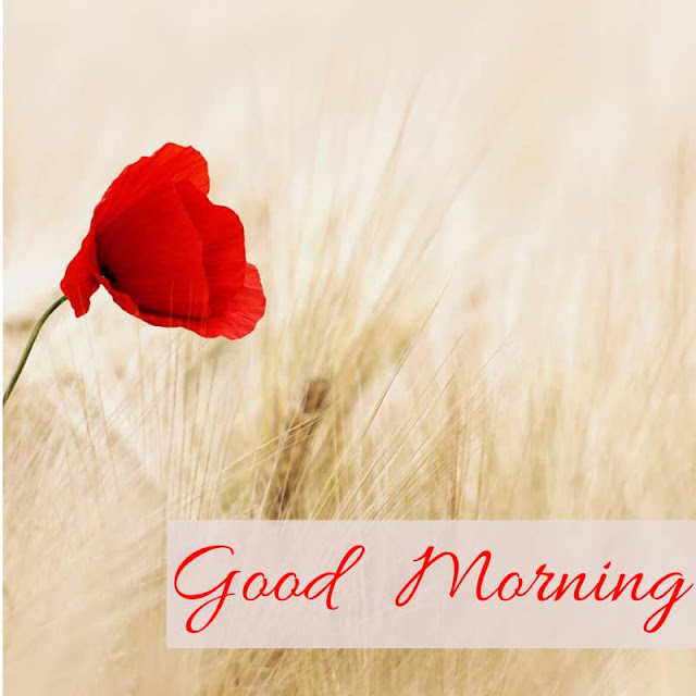Good Morning Images with Flowers Red Rose