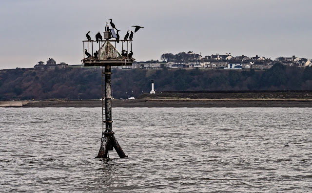 Photo of cormorants on a navigation mark in the Solway Firth