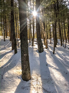 Light coming through trees in winter hike
