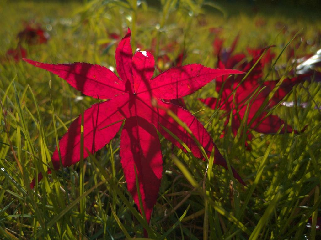 Huawai P20 - Herbstlaub