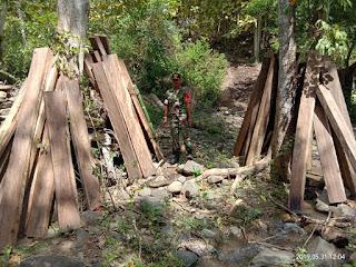 Diduga Hasil Illegal Logging, 162 Batang Kayu Sonokeling Diamankan di Hidirasa