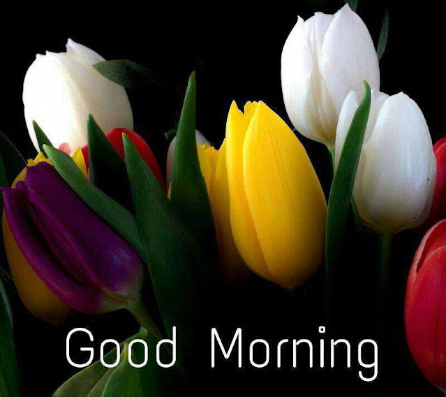 Good Morning flower Wishes pics free download