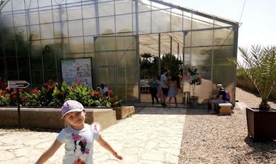 Большая коллекция кактусов в оранжереи в Болгарии