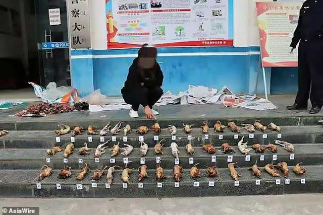 """""""المرأة آكلة الخفاش"""".. صور مقززة في مداهمة سوق """"اللحوم المسمومة"""" بالصين"""