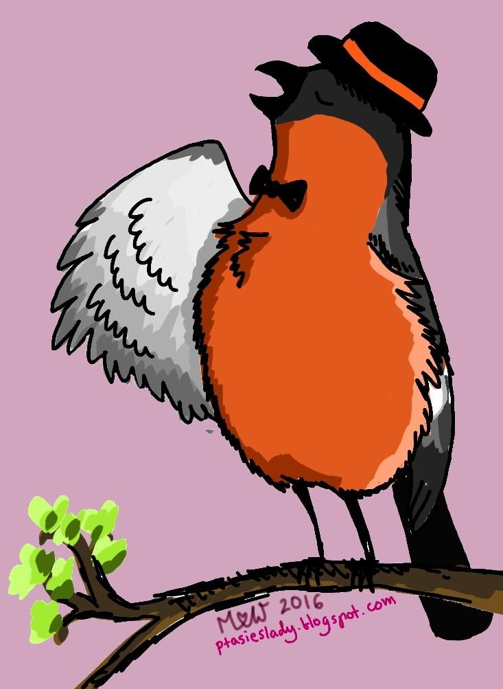 Ptasimi śladami Gil Pyrrhula Pyrrhula Eurasian Bullfinch