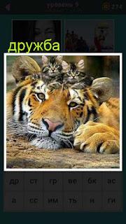 лежит тигр и на голове у него две кошки расположились, настоящая дружба
