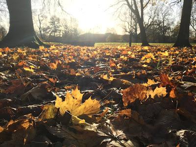 autumn Longford Park Stretford Manchester UK