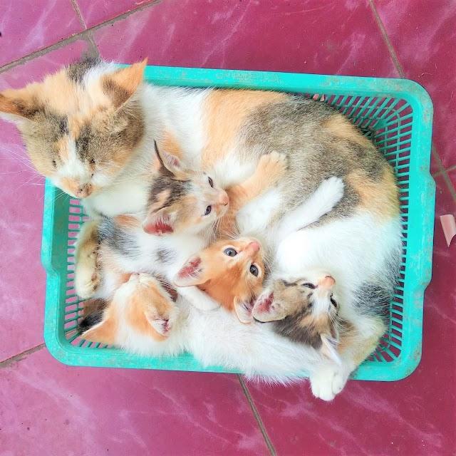 Pelihara Kucing Kampung Itu Gak Gampang!