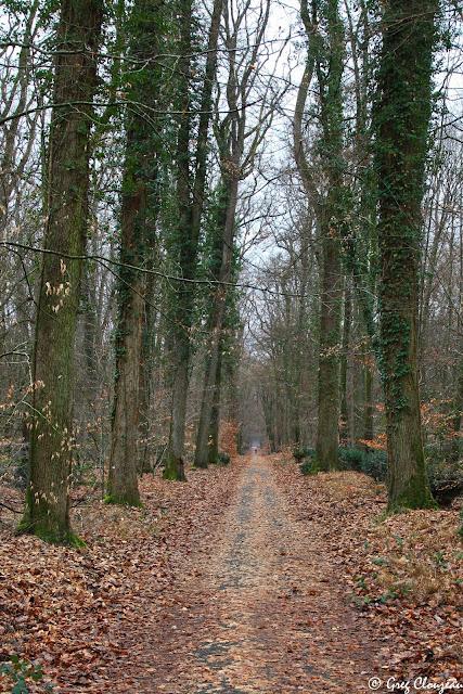 Route de la Reine, Forêt de Fontainebleau