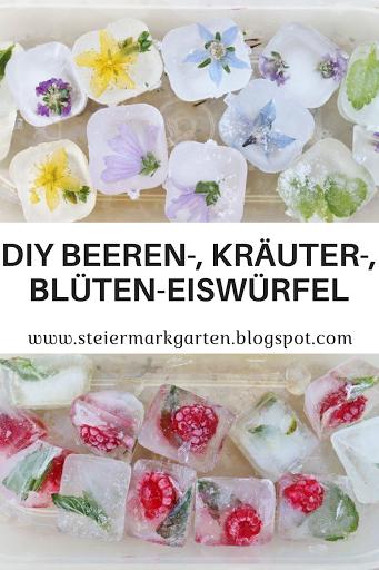 Beeren-Kräuter-Blüten-Eiswürfel-DIY-Pin-Steiermarkgarten