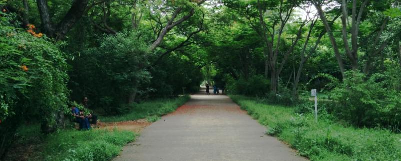 Theosophical society Chennai, The Huddleston Gardens of Theosophical society in Adyar, Chennai