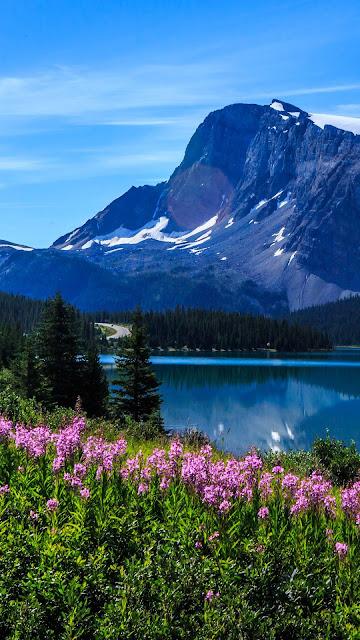 Landscape, nature, mountains, lake, flowers, trees