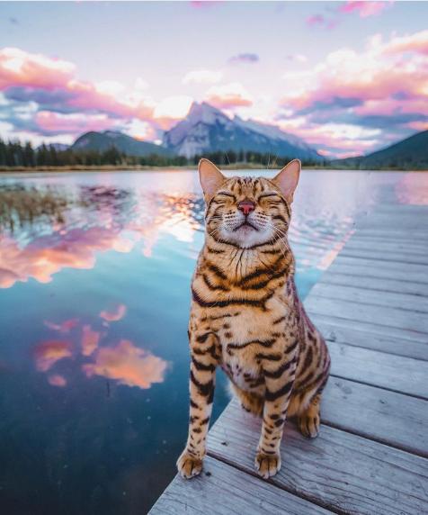 Suki Cat