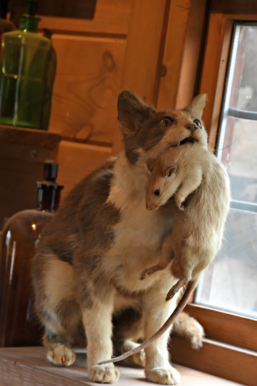 Taxidermy at The Alnwick Garden