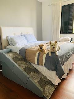 rampa para cães com corrimão
