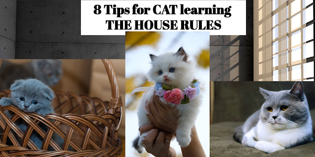 8-tips-for-cat -learning-the -house-rules