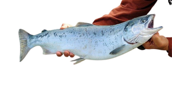 willd fish
