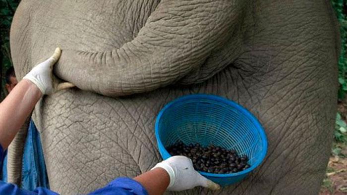 Kopi dan Bir Gajah